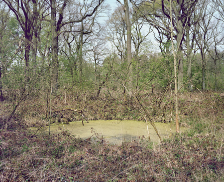 #35 (Beerenbruch), 2010, Chromogenic Color Print. 45.3 x 55.9 inches  Edition of 3 + 1 AP