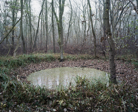 #66 (Mascheroder Holz), 2011, C-type print. 18.2 x 22 inches  Edition of 4 + 1 AP
